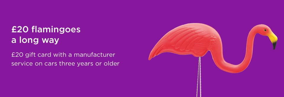 offer text with flamingo on purple background